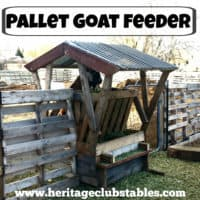 Having a goat feeder that wastes as little hay as possible is so important! Read more on How to Build a Goat Feeder Using Pallets