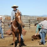 Colt Training