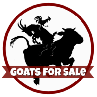 goats-for-sale