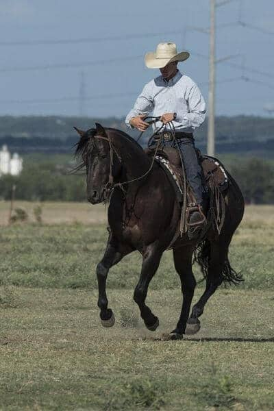 Horse trainer riding a black horse in a pasture