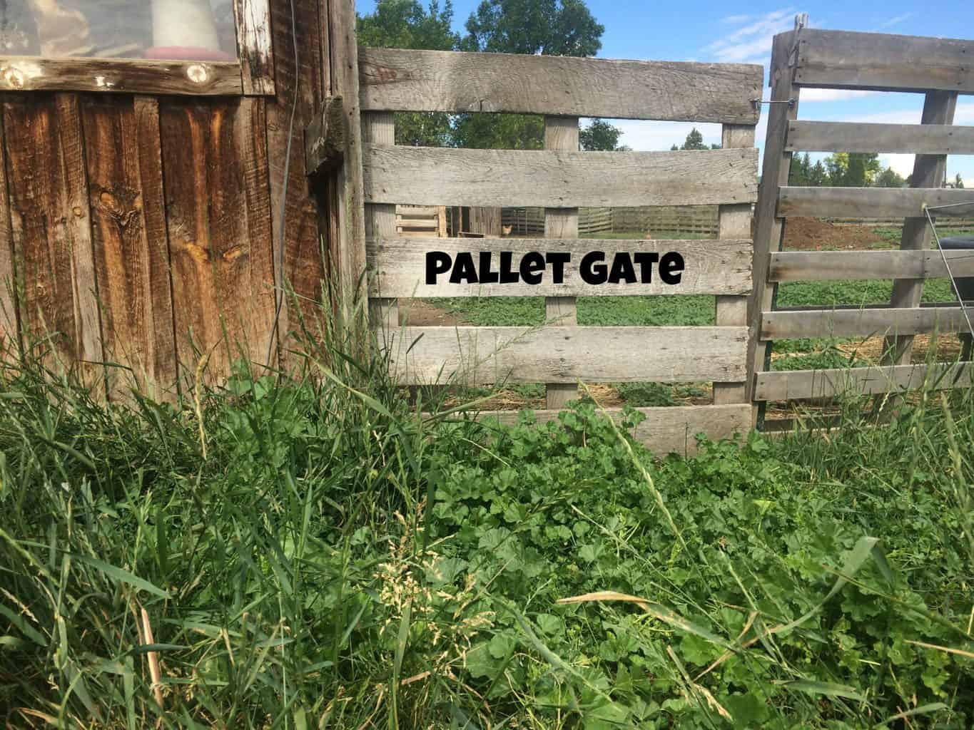 Pallet Fence: Great for small livestock