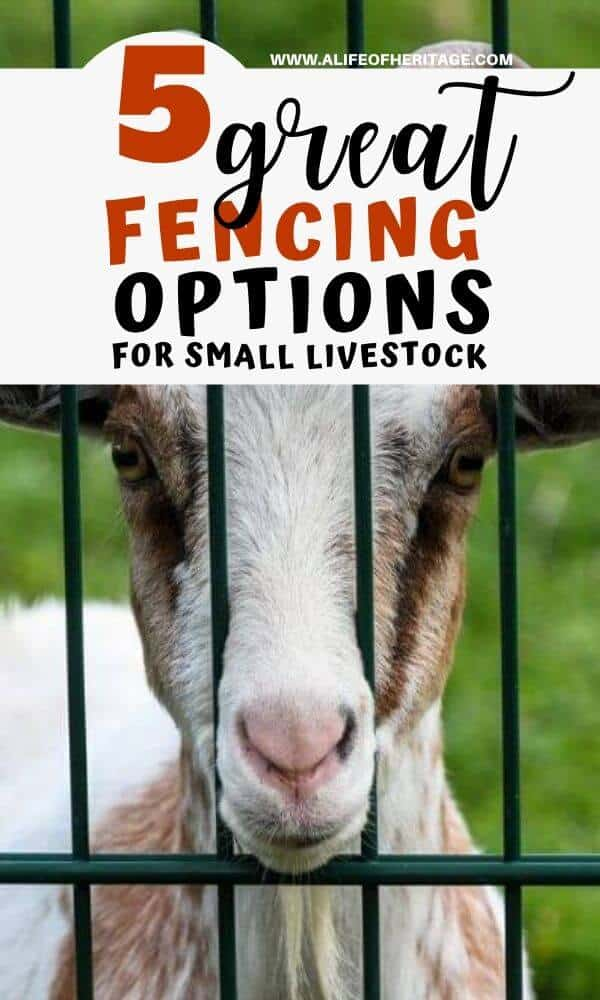 Fencing is really important when you own goats!
