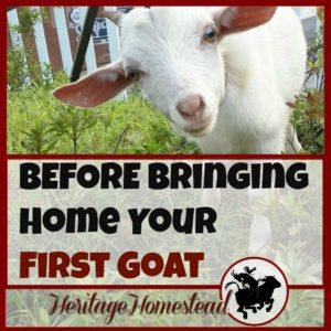 BEFORE Bringing Home Your First Goat