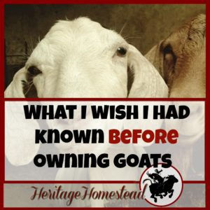 What I Wish I Had Known Before Owning Goats