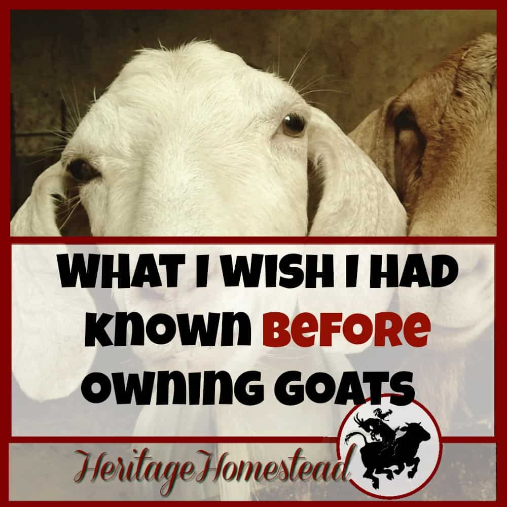 Before owning Goats | 6 things I wish I had known before owning goats. Don't you agree with #5?? But does it stop us from owning them?? Nope! Once a goat lover, always one
