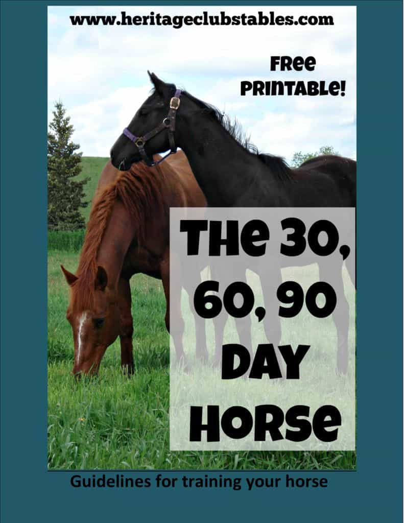 thumbnail of 30 60 90 day horse