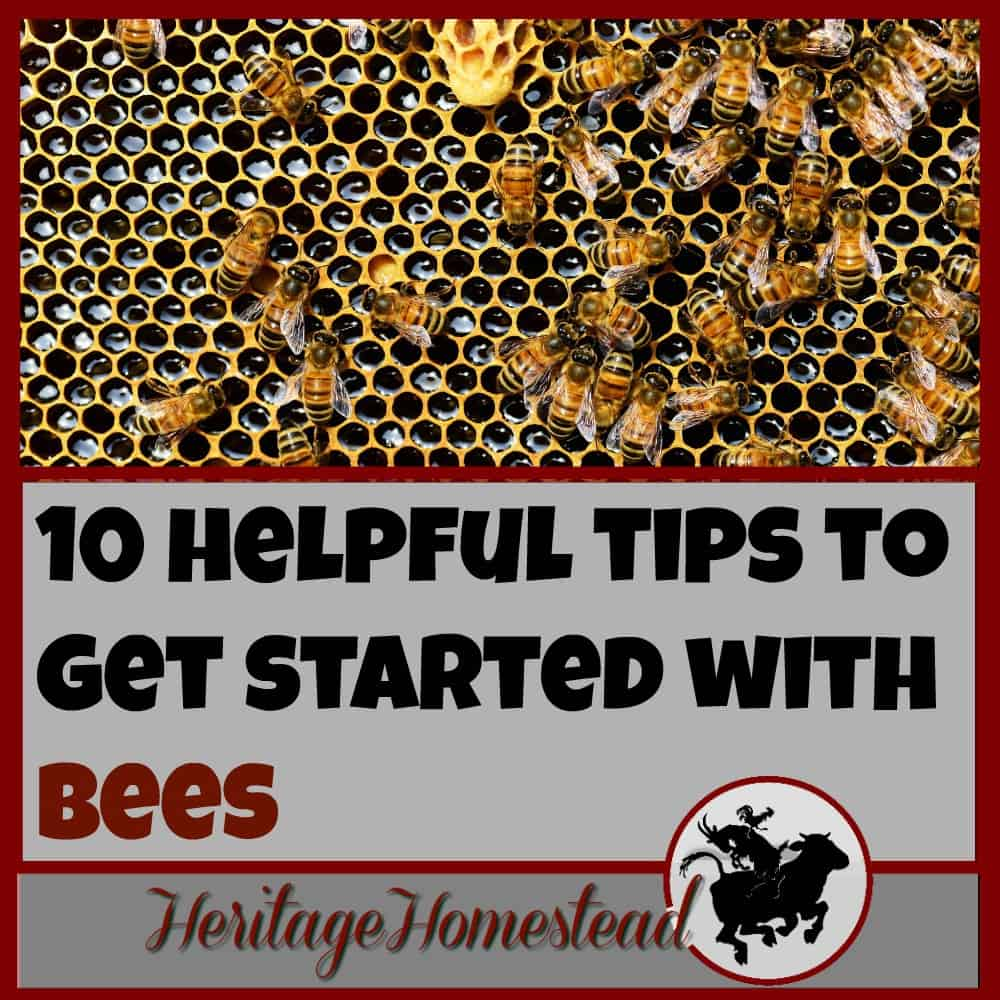 Bees | How to Bees | Starting with Bees | Are you ready to get started with bees but not really knowing how or where to begin? Follow these 10 helpful tips to getting started with bees!