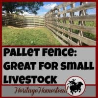 Pallet Fence | 6 reasons that I think a pallet fence makes the best fence for small livestock! Pictures and instructions included on how the pallet fence was built.