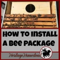 How to Install a Bee Package | Learn a great way on how to install a bee package! Print out a FREE PDF step-by-step guide. Join me, an average individual like yourself, in this adventure!