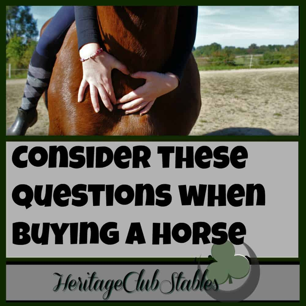 Horses | Owning Horses | Buying a Horse | Print out the FREE worksheet: