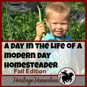 Homesteading | Fall Garden Checklist | Homestead Work | Homesteading in the Fall | A day in the life of a modern day homesteader: wonderful, full of blessings but not much down time! Download a free fall garden checklist.