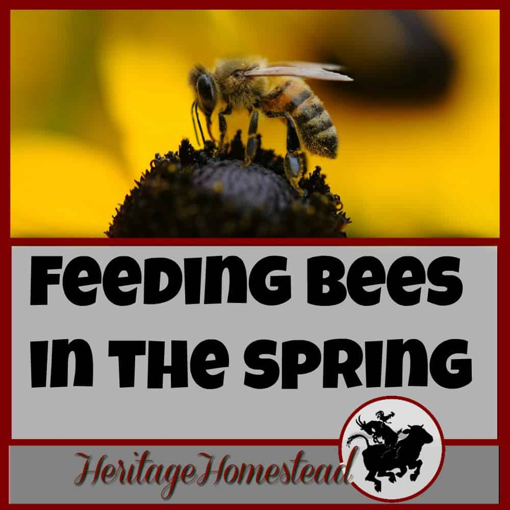 Spring Bees: (Feeding Bees in the Spring)