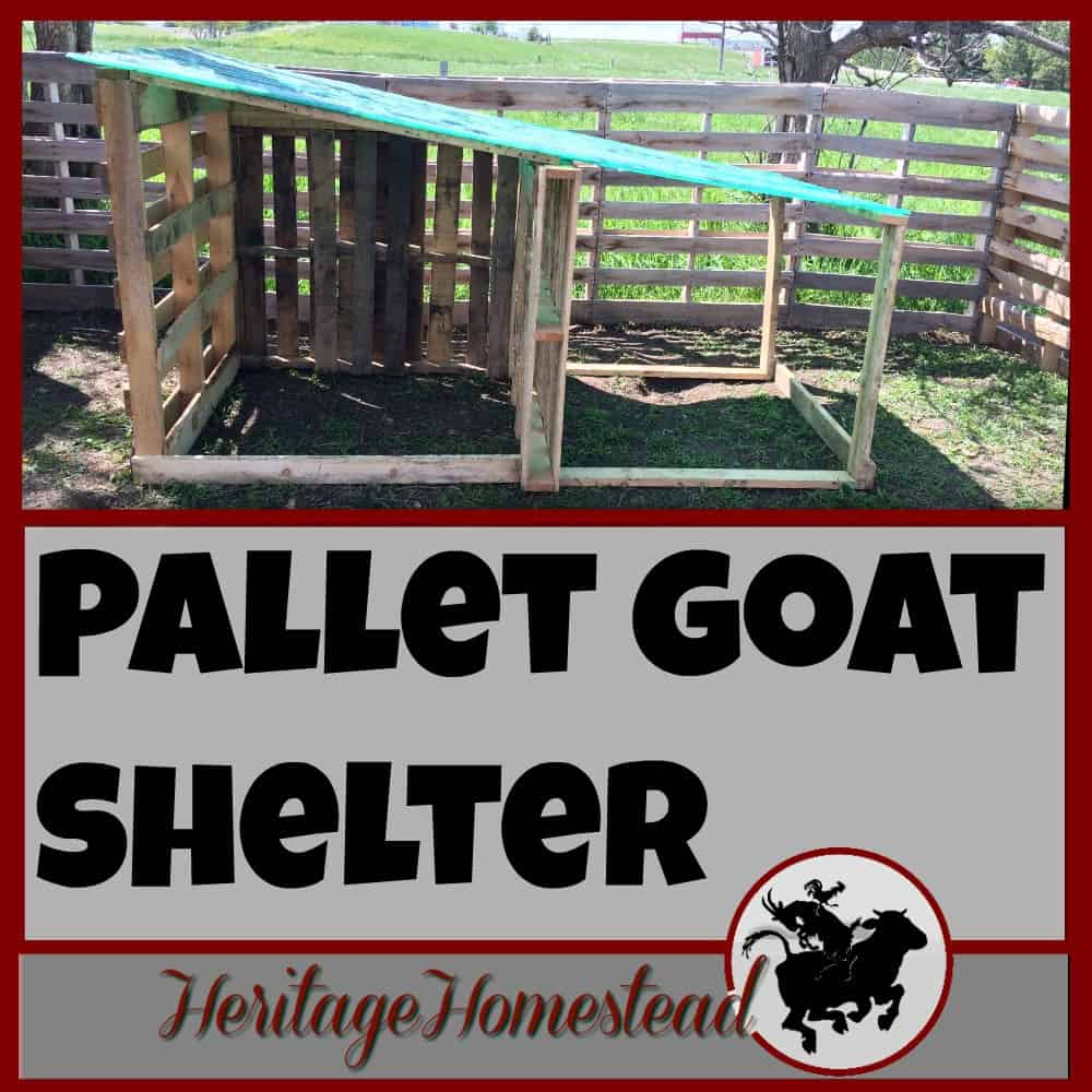 DIY, Easy, Free Goat House