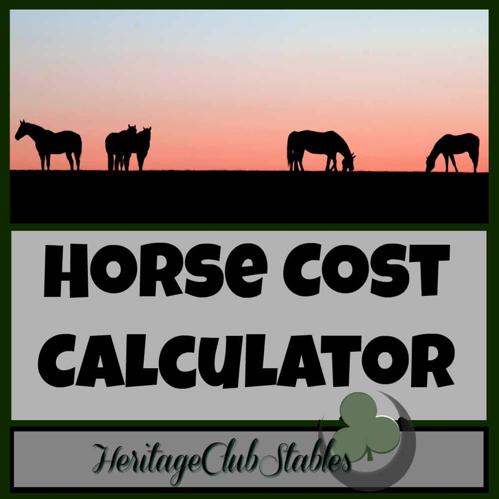 Horses | Horse Care | Caring for horses | What does a horse really cost? Please utilize the FREE Horse Cost Calculator provided. Take a look at what owning a horse would really cost you