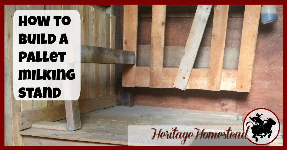 How to build a pallet milking stand a life of heritage for How to build a tree stand from a pallet