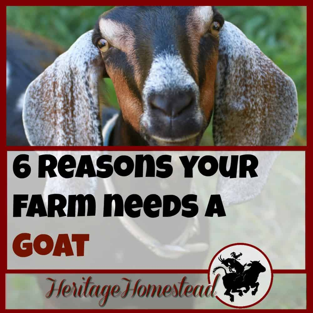 13 Reasons YOU Need A Goat