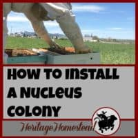 "How to Install a Nucleus Colony | Print out the FREE printable on ""how to install a nucleus colony"" and watch the video provided to see how I installed my nuc."