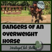 Horses | Horse Care | Owning Horses | Overweight Horses | Feeding Horses | Having an overweight horse just isn't worth it. You love your horse, but don't love it to death. Be wise in the amount of hay and grain you are feeding