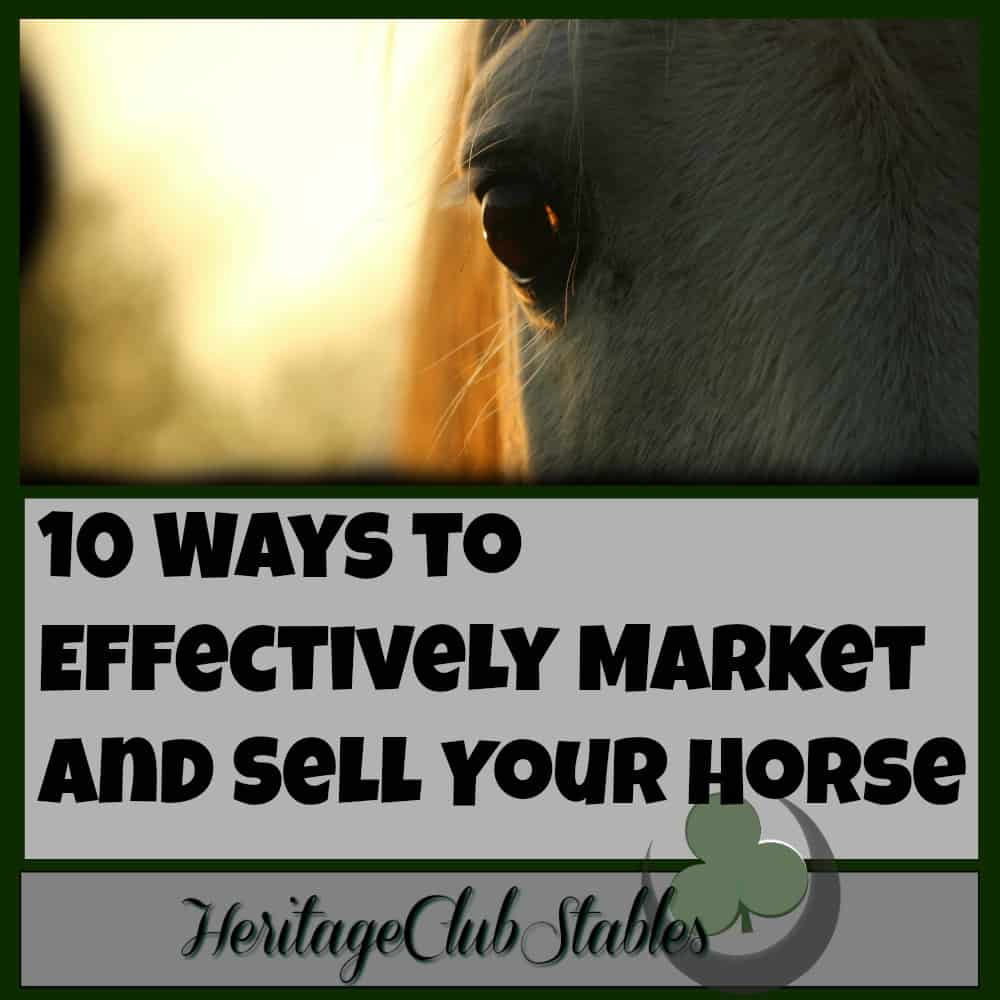 Horses | How to sell a horse | Tips to sell a horse | These 10 ways to effectively market and sell your horse are helpful and effective! Horses | Selling Horses | How to sell a horse | Take the guess work out of how to sell your horse!