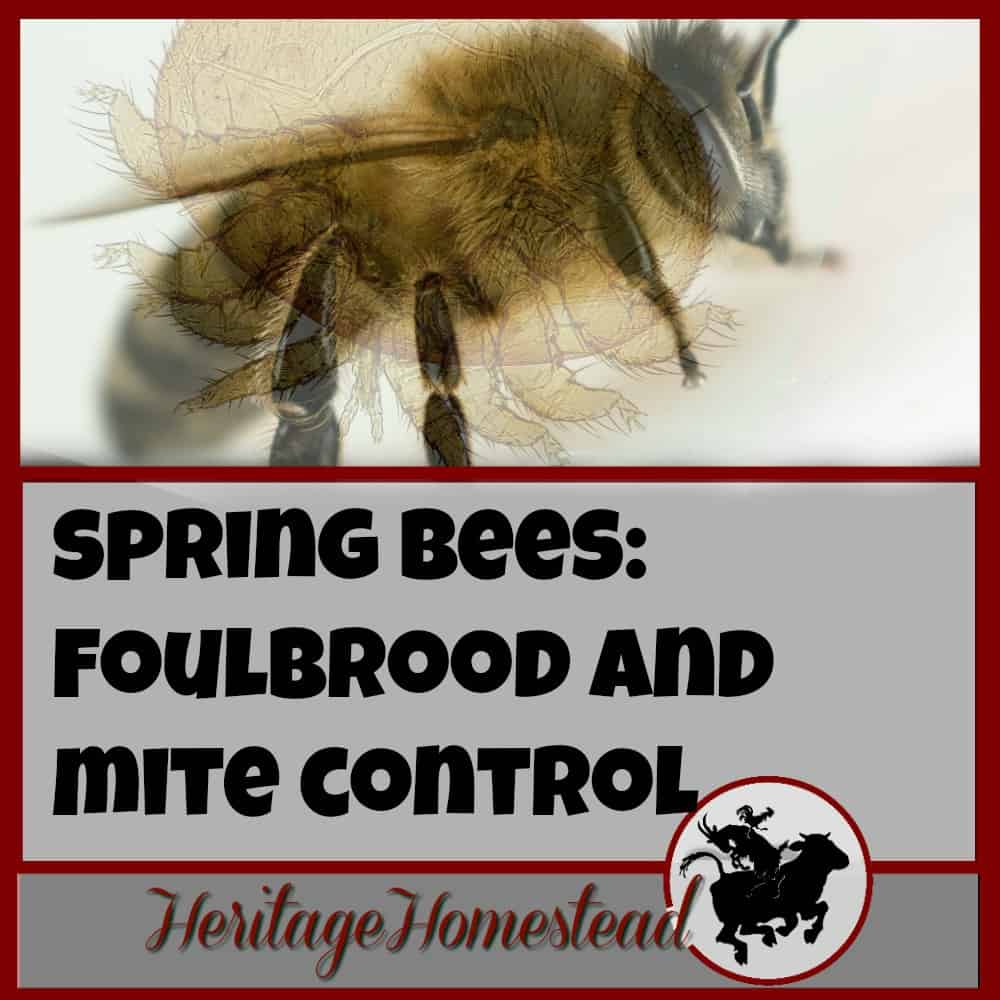 Bees | Care for Bees | Bee Diseases | Bee Mites | A healthy bee, is a healthy hive. Tag along and watch as I open up my hive and treat for foulbrood and mite control. It's an important step for beekeepers.