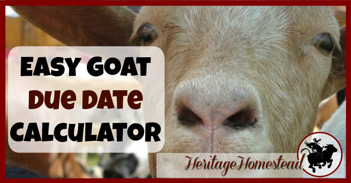 Goat due date calculator | Goat Care during pregnancy | Feed and care ...