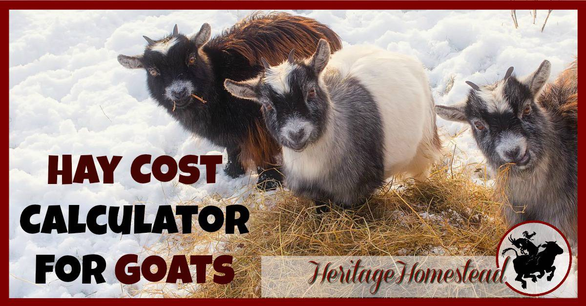 Hay cost calculator for goats how much hay do i need for How much does it cost to build a farmhouse