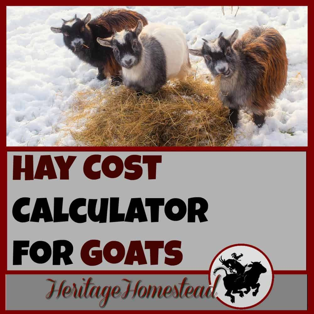 Hay Cost Calculator for GOATS: How Much Hay Do I Need For My Goat
