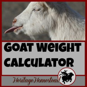 Goat Care | Goat Weight Calculator | How do I know my goat's weight? | Have you ever ask the question: How to weigh my goat? Here are four ways to weigh your goat and a FREE weight calculator will help you!