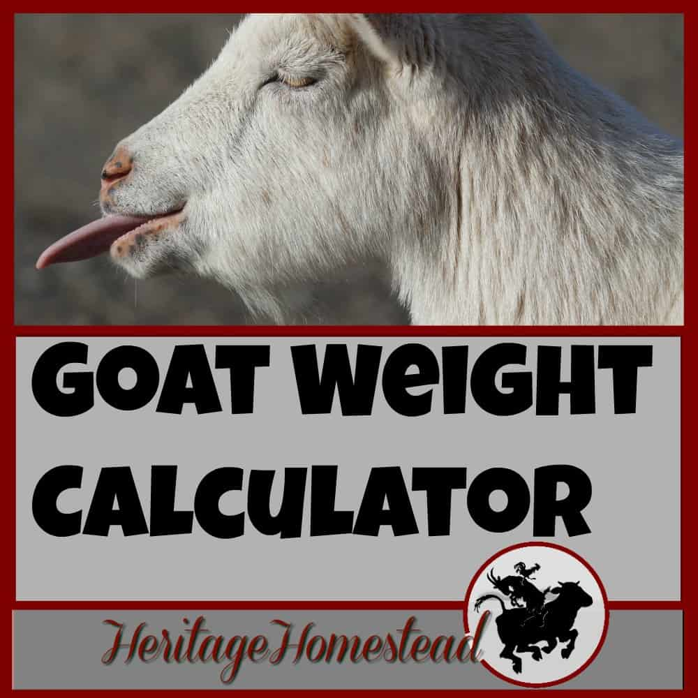 Goat Weight: 4 EASY Ways to Weigh