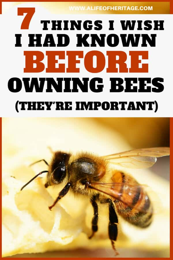 What you need to know before owning bees