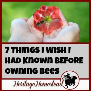 7 Things I Wish I Had Known BEFORE Owning Bees