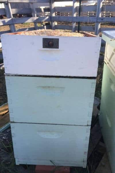 three bee hives with moisture quilts on top