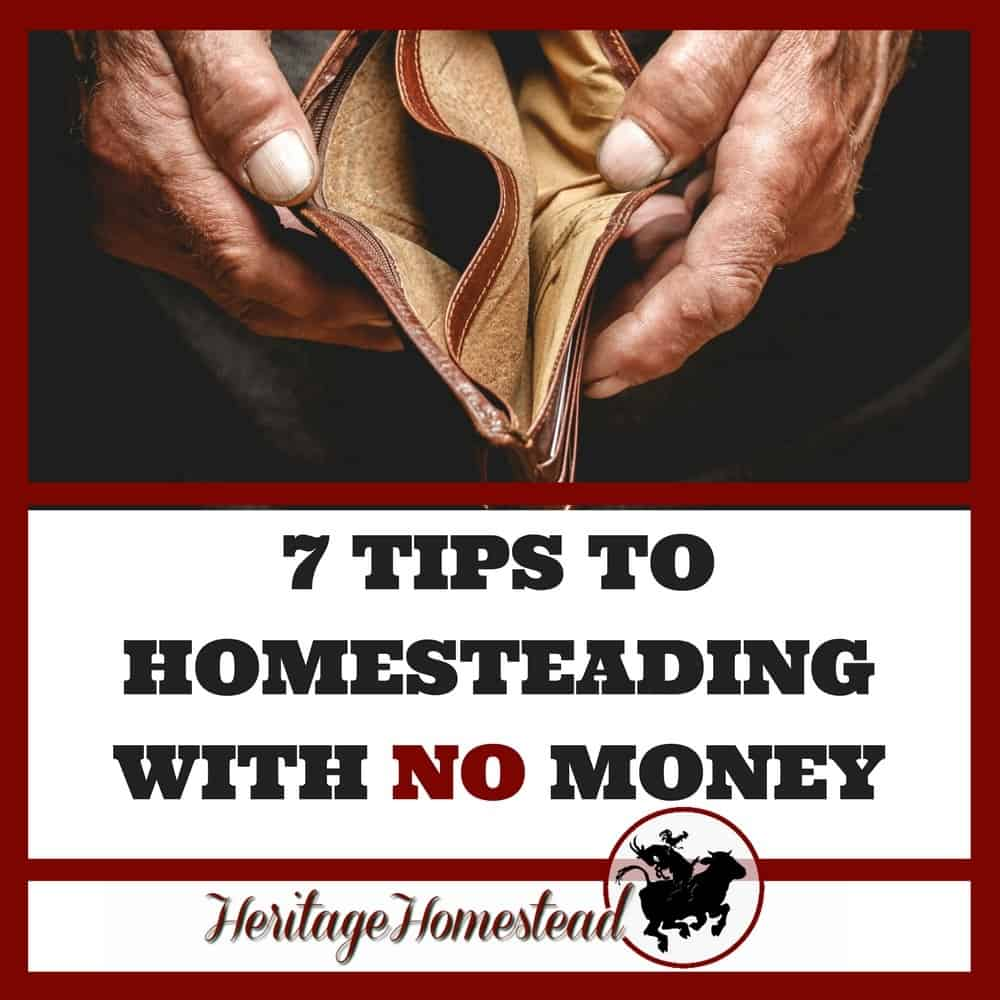 Homesteading With No Money