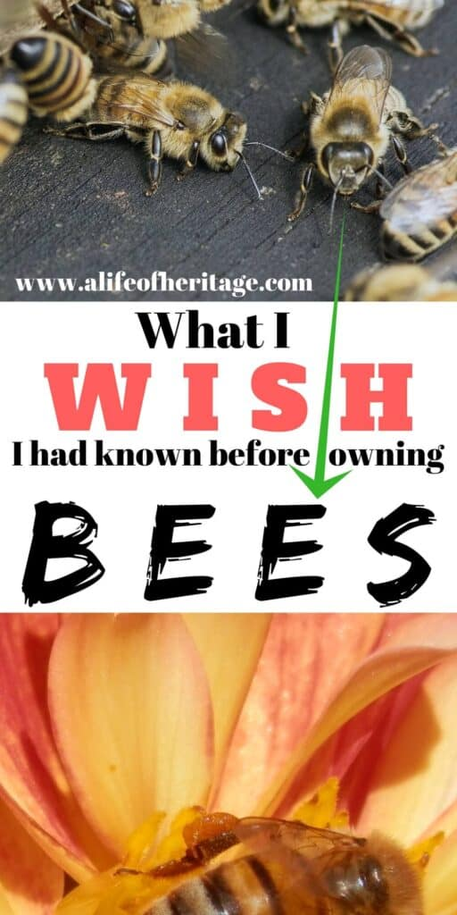 What I wish I had known before owning bees