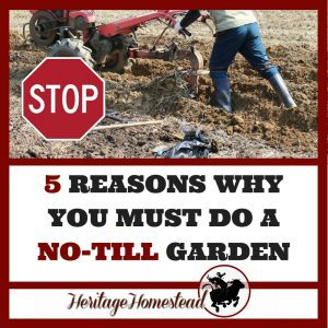 Why You Absolutely MUST Do A No-Till Garden