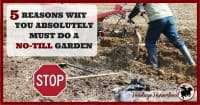 "Garden | Gardening | No Till Gardening | How to no till | Gardening Ideas | Gardening for beginners | Gardening DIY | ""Forget everything you know about gardening and start over."" 5 reasons to do a no-till garden and what tilling does to your soil."