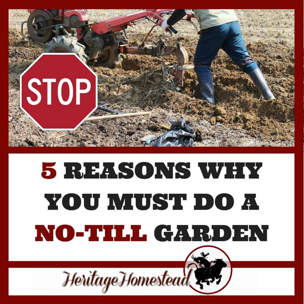 No till farming or no-till gardening and 5 reasons you must do a no till garden