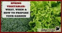 Spring Vegetables | Spring Gardening | Spring garden ideas | No till gardening | Gardening | Garden Ideas | Spring planting guide | Prepare your garden | 12 tips on how to prepare, plant and care for your spring vegetables. The health of your vegetables is in the health of your soil.