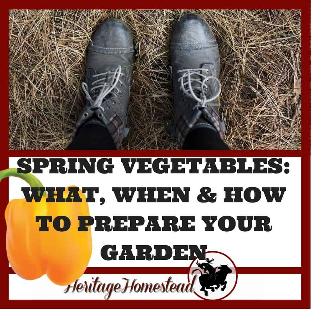 Spring Vegetables: What, When & How to Prepare Your Garden