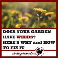 Gardening | Why my garden has weeds | Eliminating weeds | How to garden | Gardening for beginners | No Till Garden | Why does my garden have weeds? Your garden will thrive when you understanding WHY it has weeds. Eliminate them naturally while working with nature.