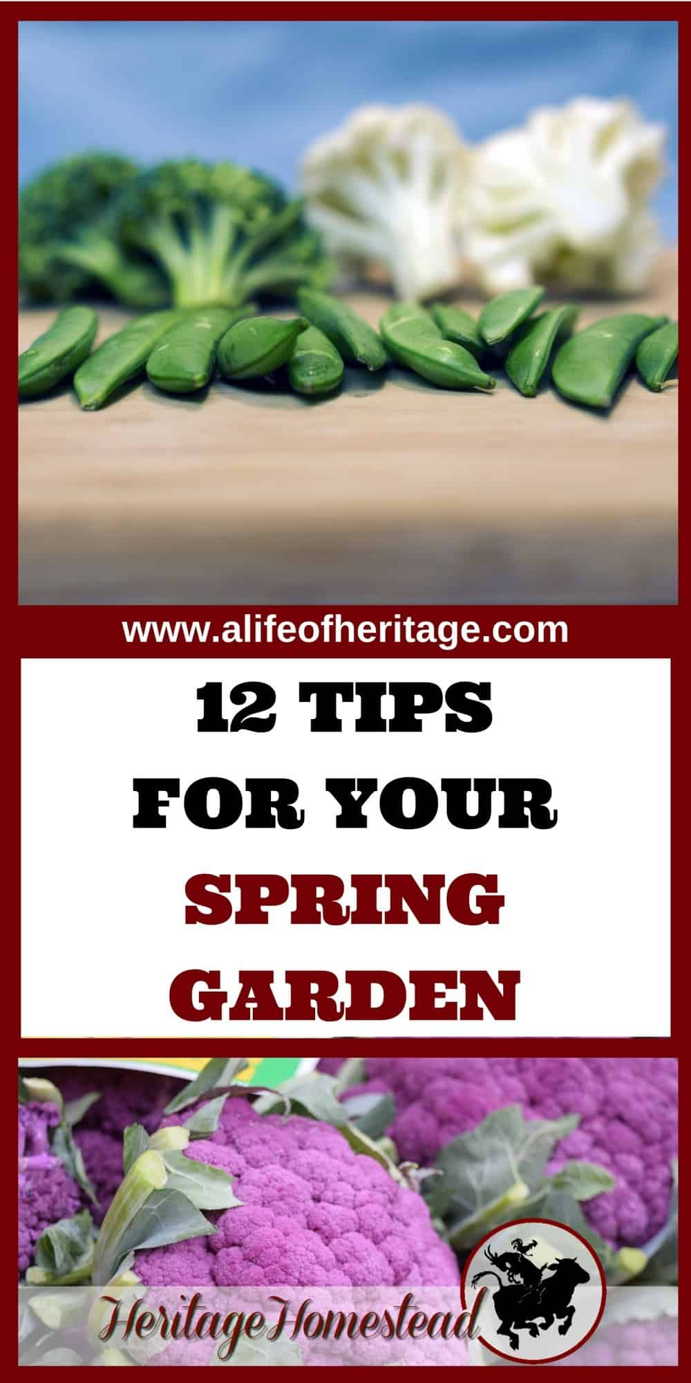 spring vegetables what when u0026 how to prepare your garden a