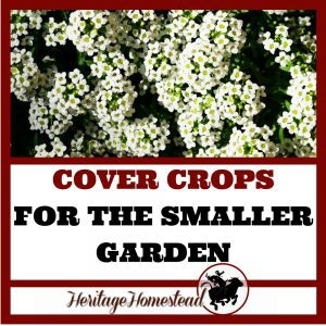 Cover crops are underutilized and misunderstood in the smaller vegetable garden. Understand what they are, which to choose and how to use them.