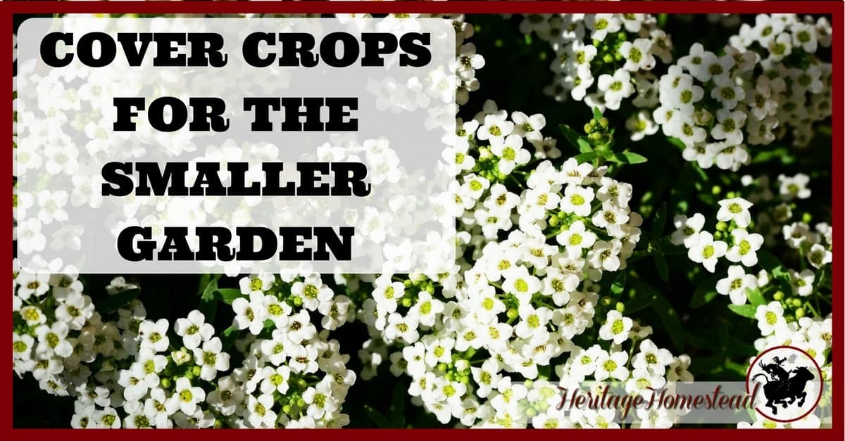 Cover crops for the smaller vegetable gardens a life of - Cover crops for vegetable gardens ...