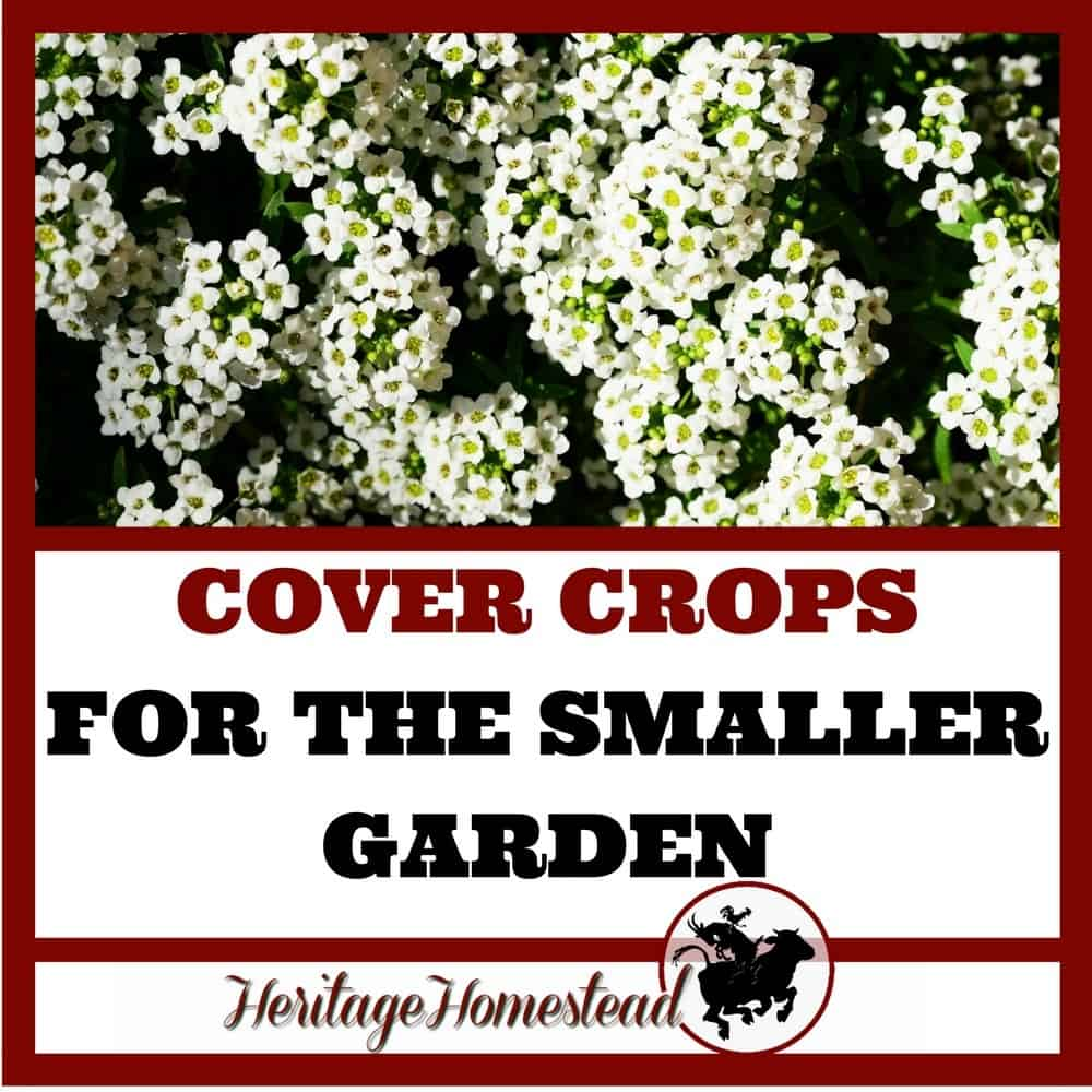 Cover Crops for the Smaller Vegetable Gardens