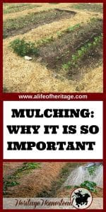 Mulching just may be the saving grace of the gardening year. Find out your mulching options, what it does for the soil and the best techniques.