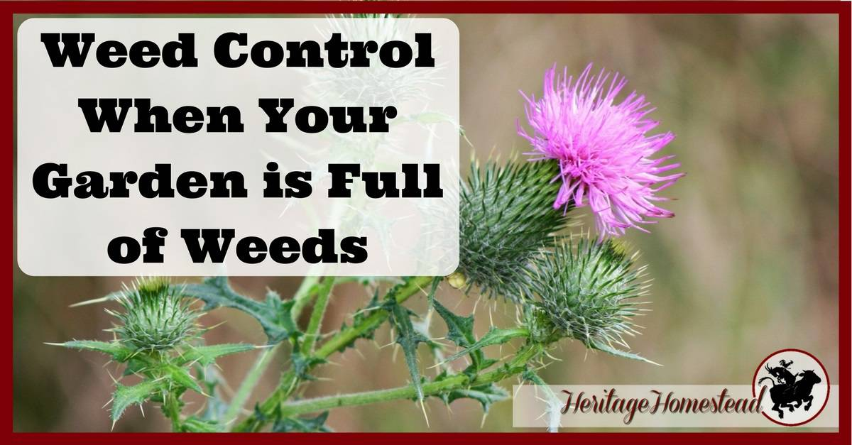 Weed Control When Your Garden is Full of Weeds 5 Best Steps