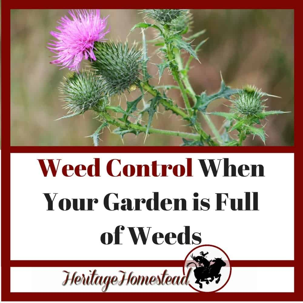 Weed Control When Your Garden is Full of Weeds [5 Best Steps]