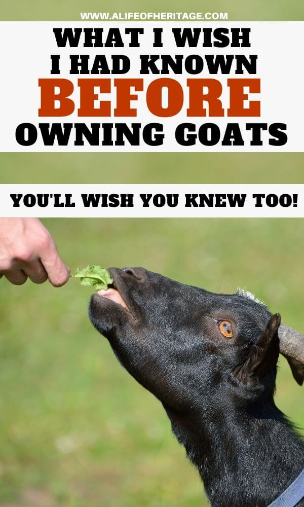What I wish I had known before owning goats. You'll wish you had know them too!