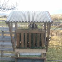 Goat Feeder Using Pallet Boards