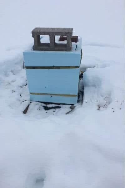Insulating a beehive with blue insulation to keep it warm during the winter months